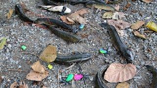 getlinkyoutube.com-ถล่มฝูงปลาช่อนนา ที่สุพรรณ  FISHINGEZ