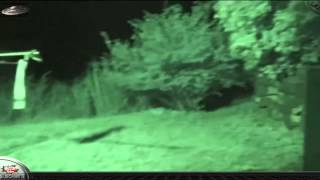 getlinkyoutube.com-Ufo, Ovni, Vídeo Real 2 Jóvenes Graban un Extraterrestre GRIS July 2015
