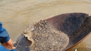 getlinkyoutube.com-Find Gold Mekong River (ร่อนทองแม่น้ำโขง หาดูยากมาก)