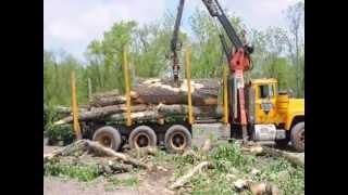 XXX Huge Trees Being Taken Down