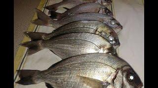ψαρεμα σκαθαρια,με δολωμενο engetsu