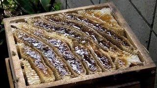 getlinkyoutube.com-ニホンミツバチ採蜜