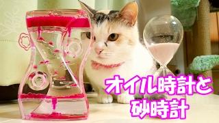 getlinkyoutube.com-オイル時計と砂時計に眠気を誘われた猫