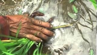 getlinkyoutube.com-การทำน้ำปู