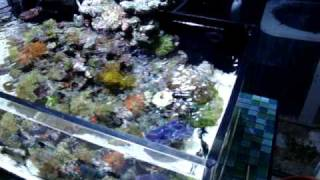 getlinkyoutube.com-20 gallon shallow reef tank