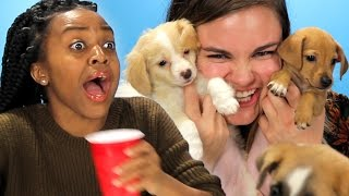 getlinkyoutube.com-Drunk Girls Get Surprised With Puppies