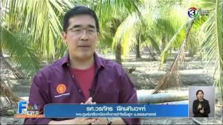 getlinkyoutube.com-เกษตร ฮอตนิวส์ | งานวิจัยมะพร้าวน้ำหอมลูกดก | 09-02-58