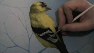 getlinkyoutube.com-Acrylic painting time lapse (preview) of a goldfinch