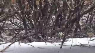 getlinkyoutube.com-Окунь Дуром.Первый лед(КАЗАХСТАН-ИШИМ)
