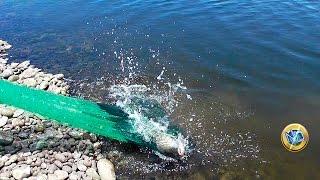 getlinkyoutube.com-►►PESCA DE GRANDES TILAPIAS CON ATARRAYA EN RÍO | Fishing for large tilapia with net