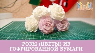 getlinkyoutube.com-Розы (цветы) из гофрированной бумаги