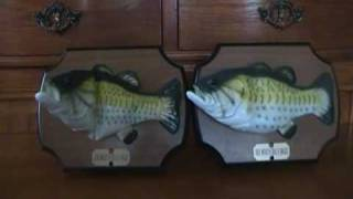 getlinkyoutube.com-Big Mouth Billy Bass Duo