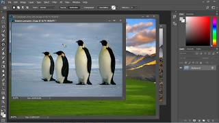 Photoshop Tutorial for Beginners - 10 - Patch Tool width=