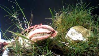 getlinkyoutube.com-9 Tanaman Terunik dan teraneh di Dunia, yang ke 9 Mirip tuyul gondrong