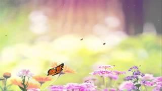 getlinkyoutube.com-Футаж Цветы и бабочки