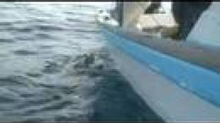 getlinkyoutube.com-REEL REAL PANGA FISHING