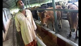 getlinkyoutube.com-സ്കറിയാ പിള്ളയുടെ കൃഷിപാഠങ്ങള്