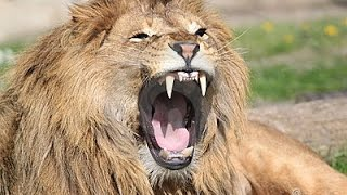 getlinkyoutube.com-The Man Eating Lions Of Tsavo Kenya