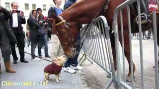 getlinkyoutube.com-FUNNY HORSES ★ Funny Horse Videos [Funny Pets]