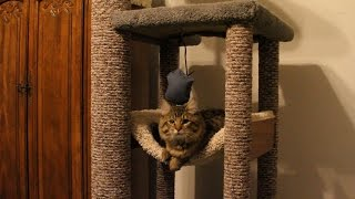 getlinkyoutube.com-How to DIY heavy Duty Cat Tree - Tower - Climber for a Maine Coon cat