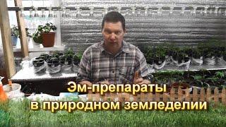 Эм препараты в природном земледелии