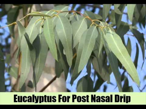 6 Effective Herbal Remedies For Post Nasal Drip