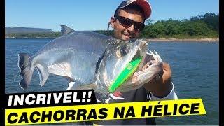 Programa Pura Pesca, Cachorras e Bicudas do Rio Tocantins.