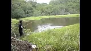 getlinkyoutube.com-mantab mancing ikan gabus kalimantan