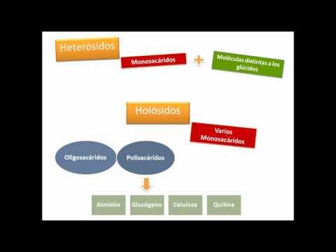 Biopolimeros: video explicativo