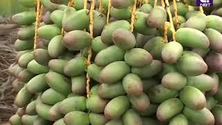 getlinkyoutube.com-อินทผลัม วิเชียรบุรี