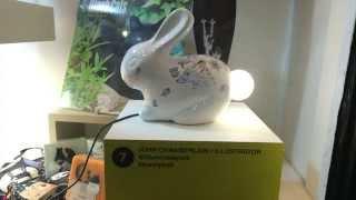 getlinkyoutube.com-Illuminating York 2015 - Bunny Trail - All 30