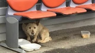 getlinkyoutube.com-Scared Homeless Dog Has the Rescue of a Lifetime. Her Transformation Will Melt Your Heart.