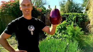 getlinkyoutube.com-How to Plant a Raised Bed Garden in Phoenix, Arizona