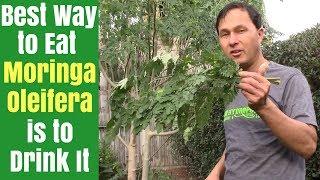 Best Way to Eat Moringa is to Drink It - How to Juice Fresh Moringa Oleifera Leaves