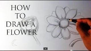 getlinkyoutube.com-How to Draw a Flower - Easy Drawings