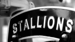 STALLIONS 150cc By สตูดิโอไอ้หนวด