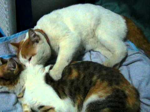 สปาแมว By สาคู