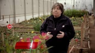 getlinkyoutube.com-INTA FLORICULTURA | Actividad Económica HD (canal 7)