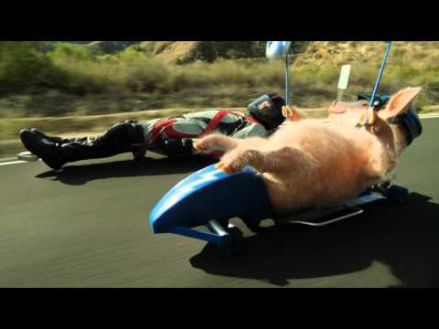 Maxwell the Piggy Meets the Street Luge GEICO Commercial