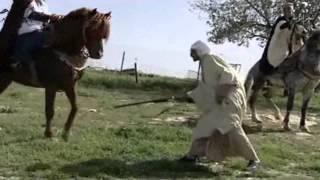 getlinkyoutube.com-تربية الخيول العربية و  البربرية الاصيلة في مدينة السوقر
