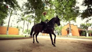 "getlinkyoutube.com-Los Mayitos De Sinaloa - Somos De A Caballo (Video Oficial) (2015) - ""EXCLUSIVO"""