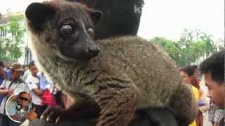 getlinkyoutube.com-Jakarta Civet Lover Community - Kotatua 2013 (Original)