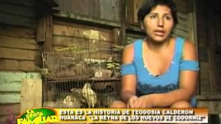 getlinkyoutube.com-REYNA DEL HUEVO DE CODORNIZ UTV .mpg