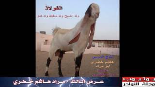 getlinkyoutube.com-الماعز الحجازي لمراد هاشم خضري