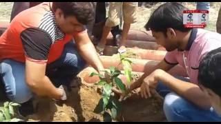 हरिद्वार: तत्पर फाउंडेशन ने किया वृक्षारोपण