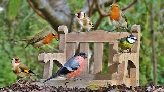 getlinkyoutube.com-Video for Cats to Watch : Garden Birds at The Tiny Bench NEW