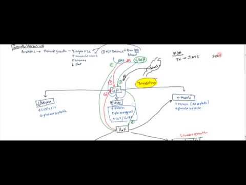 06 Growth Hormone and Insulin Like Growth Factor (IGF) - Gigantism and Acromegaly