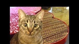 getlinkyoutube.com-DIY Rascador De Cartón Para Gato