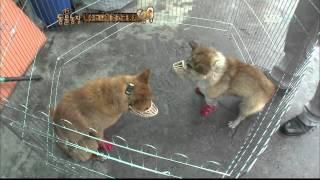 getlinkyoutube.com-TV 동물농장 뭉치의 복수혈전(565회)