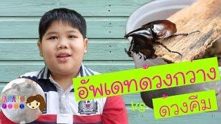 getlinkyoutube.com-อัพเดทด้วงกว่าง ด้วงคีมฟันเลื่อยเหนือ   Jananoi Pets